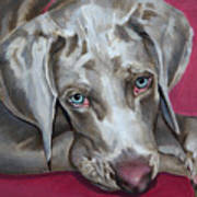 Scooby Weimaraner Pet Portrait Art Print