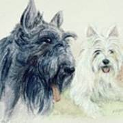 Scottie And Westie Art Print