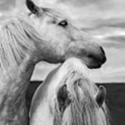 Scottish Horses Art Print