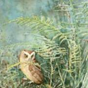 Screech Of Inglis Island Art Print