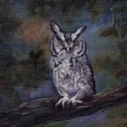 Screech Owl Art Print