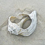 Sculpted By The Atlantic Ocean Art Print