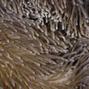 Sea Anemone Closeup Art Print