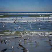 Sea Birds Feeding On Florida Coast Dsc00473_16 Art Print