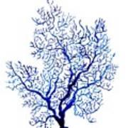 Sea Coral Art Print