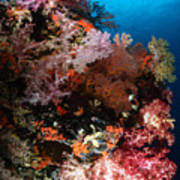 Sea Fans And Soft Coral, Fiji Art Print