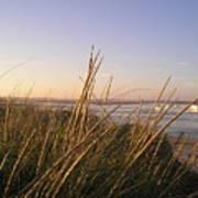 Sea Grass Overlooking The Harbor Art Print