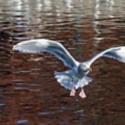 Sea Gull Landing Art Print