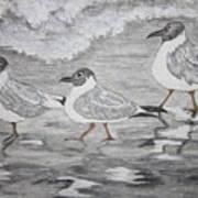 Sea Gulls Dodging The Ocean Waves Art Print
