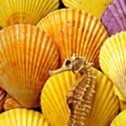 Sea Horse And Sea Shells Art Print