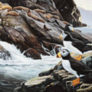 Sea Lion Island-puffins Art Print