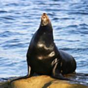 Sea Lion Sing Art Print