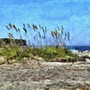 Sea Oats And Coastline Art Print