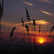 Sea Oats Blow In The Breeze As The Sun Art Print