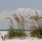 Sea Oats On A White Sandy Beach Art Print