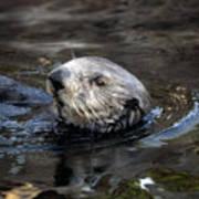 Sea Otter Art Print