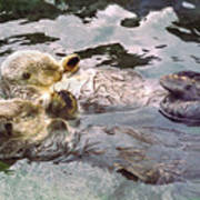 Sea Otters Holding Hands Art Print