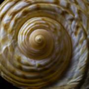 Sea Shell Beauty Art Print