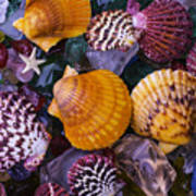 Sea Shells And Sea Glass Art Print