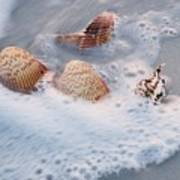 Sea Shells In A Wave Of Foam Art Print