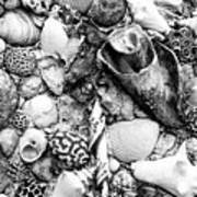 Sea Shells - Nassau, Bahamas Art Print