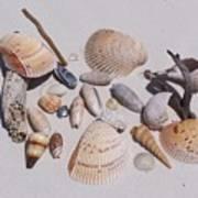 Sea Shells On White Sand Art Print
