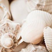 Sea Snails And Molluscs Empty Shells Sepia Toned  Art Print