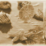 Sea Treasure -sepia Art Print