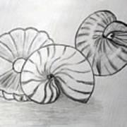 Sea Treasures Art Print