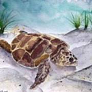 Sea Turtle 2 Art Print