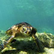 Sea Turtle #3 Art Print