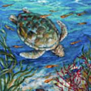 Sea Turtle Dive Art Print