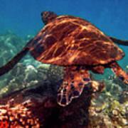 Sea Turtle On The Reef Art Print by Bette Phelan