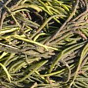 Sea Weed Cluster Art Print