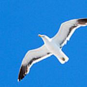 Seagull Blue Art Print by Cesar Marino