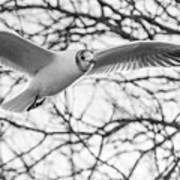 Seagull Fly By Trees Art Print