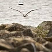 Seagull Flying Into Ocean Jetty Art Print