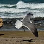 Seagull Landing Hutchinson Island, Fl Art Print