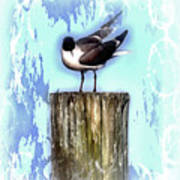 Seagull - Laughing Gull Pop Art  Art Print