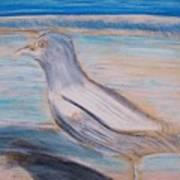 Seagull  On Seashore Art Print