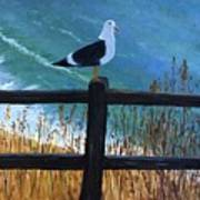 Seagull On The Fence Art Print