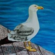 Seagull On The Shore - Gaviota En La Costa Art Print