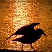 Seagull Silhouette Art Print
