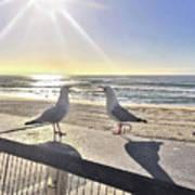 Seagull Sonnet  Art Print