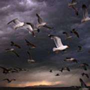 Seagull Storm Art Print