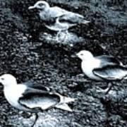 Seagull Trio Art Print