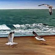 Seagulls 2 Art Print