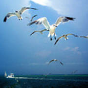 Seagulls  Print by Brittany H