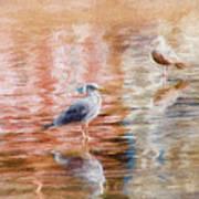 Seagulls - Impressions Art Print