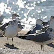 Seagulls In The Cold Sun Art Print